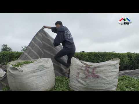 【寰宇快訊第71期】茶產業發展帶 ...