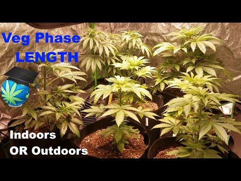 How LONG Should Vegetative Phase Be? - Indoors & Outdoors + Grow Journal Mini-Update