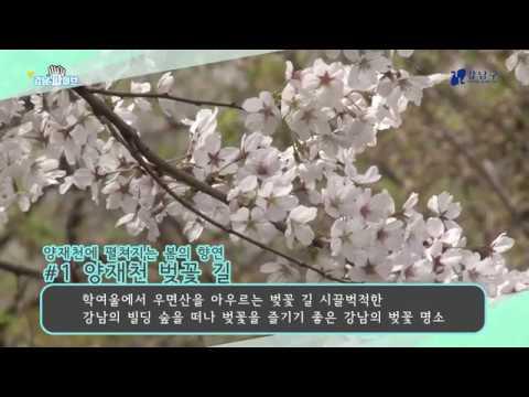 강남파이브 - 봄 따라 강남 간다! 강남 봄맞이 명소 5
