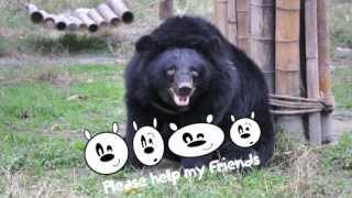 Dick bear by Caroline Herd