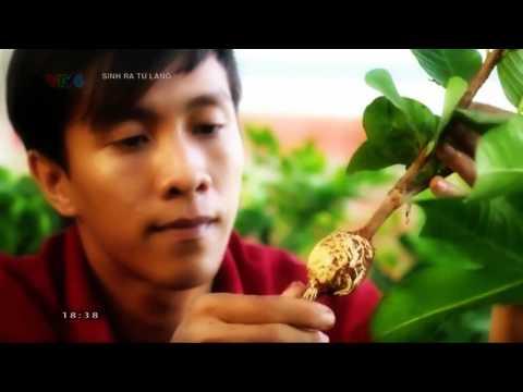 Sinh ra từ làng-Triệu phú cây giống Thanh Duy: Nguyễn Thanh Phương