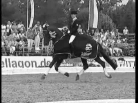 Satisfied (Equine/Horse Jumping and Dressage Video)