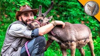Baby Reindeer Loves Hugs!