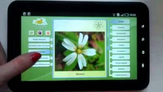 Biology. Plant Morphology YouTube video