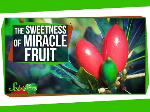 Miracle Fruit: How To Trick Your Taste Buds
