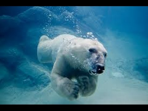 Amazing Wildlife of Alaska(full documentary)HD