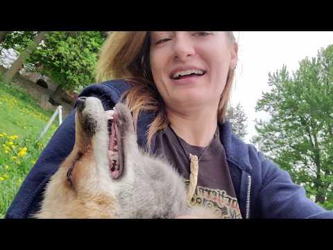 Bonding with Finnegan Fox and Dixie Fox
