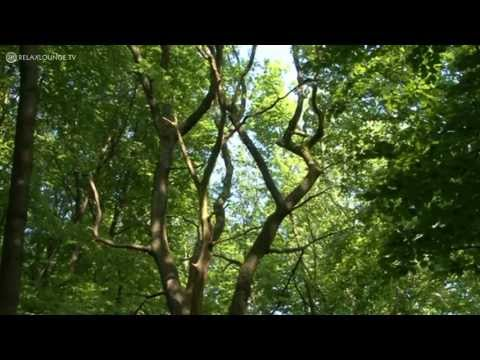 Relax with MAGIC FOREST - 02 DECIDUOUS FOREST (PURERELAX.TV)