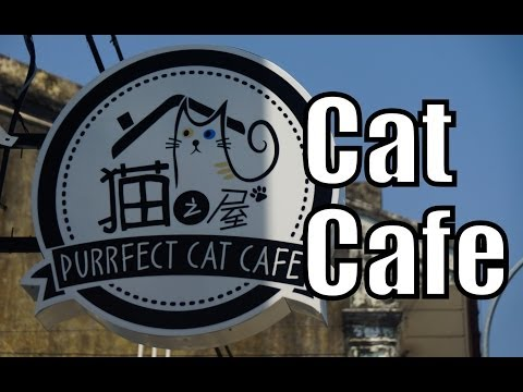 Visiting the Purrfect Cat Cafe in Georgetown - Penang, Malaysia