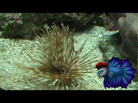 How To Care For Feather Duster Worms