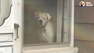 Dog Stalks His Owner From Every Window | The Dodo by The Dodo