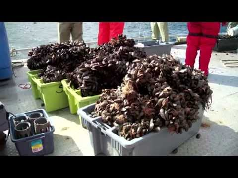 Aquaculture Research: Deep water mussel farming in Newfoundland and Labrador