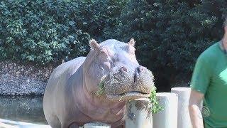 Zoológico Quinzinho de Barros - Visita Record
