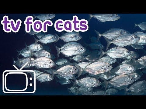 Calming TV For Cats - Garden Birds and Fish! - Cat Entertainment