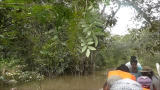 Video IQUITOS PERU 2014 RIO AMAZONAS 1 MP3, 3GP, MP4, WEBM, AVI, FLV Juli 2018