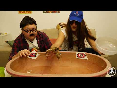 Harry The Gambling Hairy Crab (Week 9 NFL Gambling Picks)