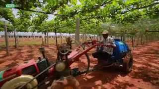 Scripting a turnaround of Grape farmers around Bangalore | IFFCO Live