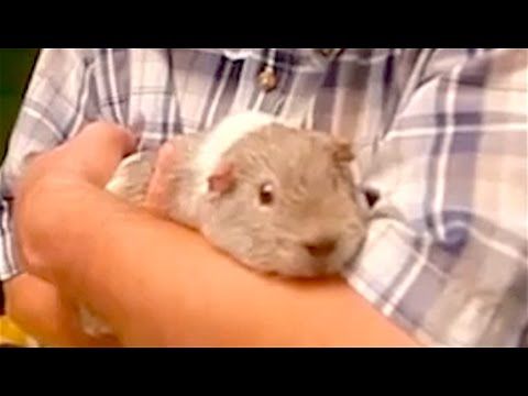 Ozzy Man s The Lives of Animals 6