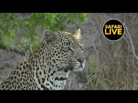 SafariLIVE - Sunset Safari - May 28, 2019