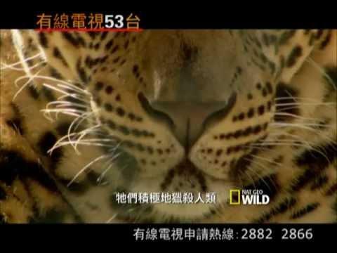 國家地埋野生頻道三月節目推介