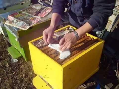 apikultura - hranire cu apifonda.