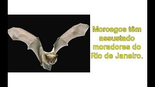 Morcegos invadem residências e assusta moradores no Rio de Janeiro.
