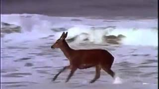 Great Barrier Island New Zealand  city images : Deer on the Beach, Great Barrier Island, New Zealand