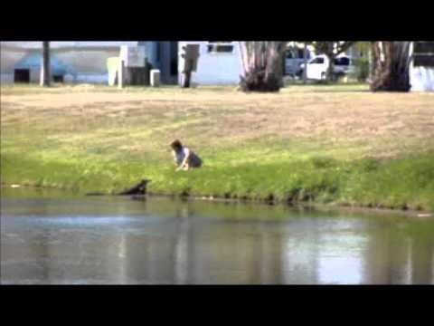 Woman Hand Feeds A Gator!