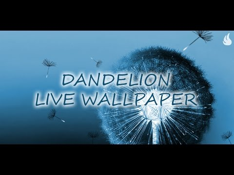 Video of Dandelion Live Wallpaper