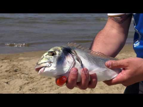 Italian Fishing TV - Colmic - Surfcasting a Mondragone
