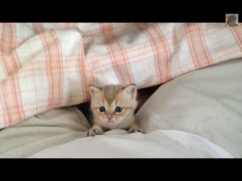 太萌了啦!從來沒見過這麼可愛的貓咪寶寶....