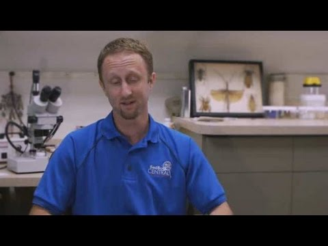 How to Get Rid of Garden Pests   Pest Control