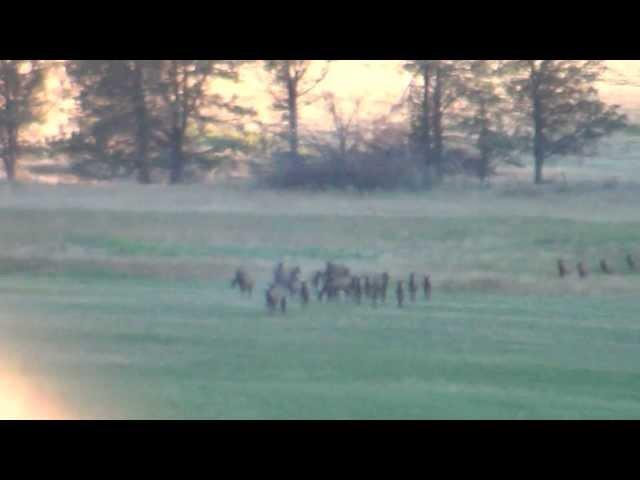 2013 Elk Video - 4