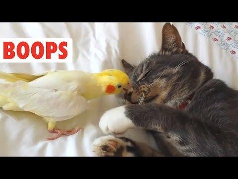 cani-e-gatti-boop-compilation