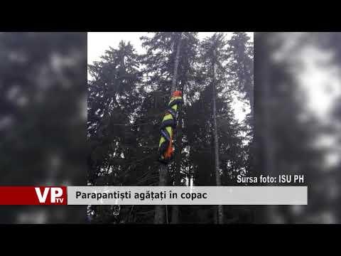 Parapantiști agățați în copac