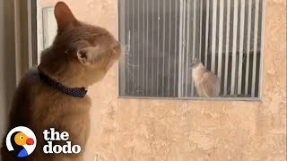 Cats Fall In Love After Seeing Each Other Through a Window Every Day   The Dodo by The Dodo