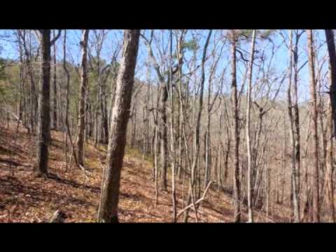 19 Acres, NF Border, Talladega County, AL