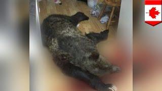 Video Un homme tue un ours dans sa cuisine après avoir été averti par son chien MP3, 3GP, MP4, WEBM, AVI, FLV Agustus 2017