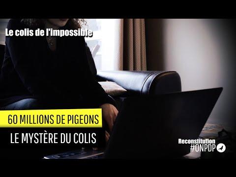60 millions de Pigeons : la livraison impossible