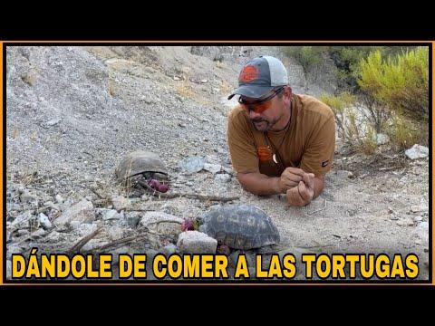 AVENTURA NÚMERO 150 Miércoles Por El Desierto 3