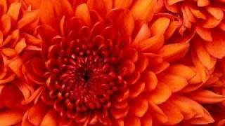 red buddha - raja raja