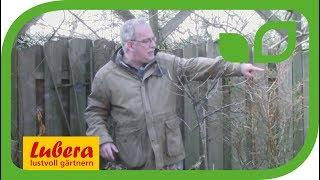 Kübelpflanzen - wie und wo überwintern?