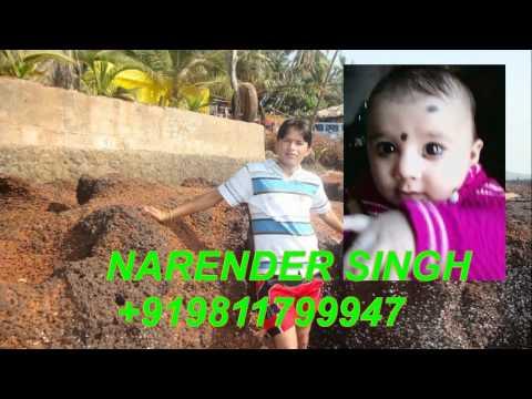 Video New Garhwali Gongs 2011 Narender Singh Rawat +919891125195,+919013297911,rawat@skytrip.in download in MP3, 3GP, MP4, WEBM, AVI, FLV January 2017