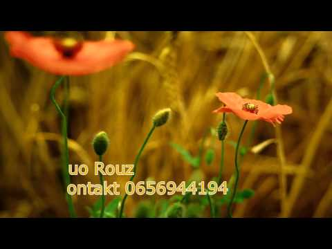 , title : 'Golly live - Eros Ramazzotti-Improvvisa luce ad est'