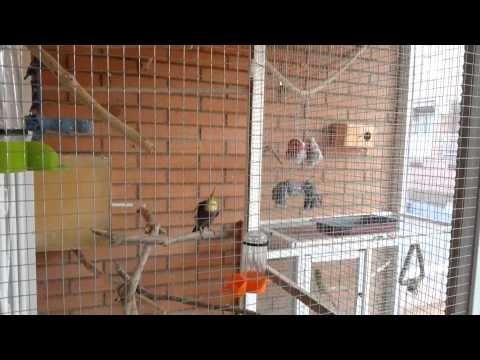 Mi voladera: ninfas, periquitos y agapornis | Nidos | Jaula