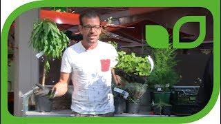 Karl Ploberger pflanzt Johannisbeeren, Himbeeren und Erdbeeren in einen Kübel