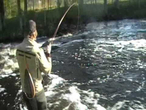 Flugbindningsvideo: Bindning och fiske med husmask