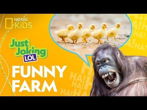 Funny photos - Funny Farm  Just Joking—LOL