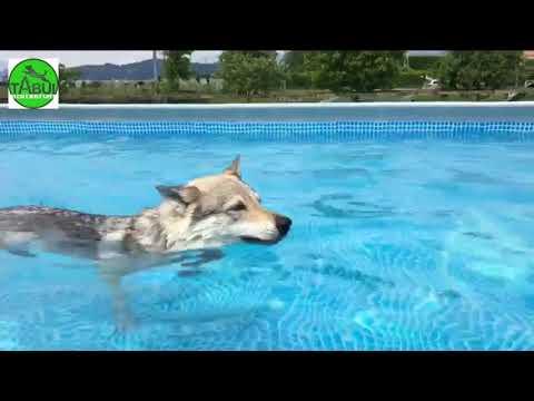 Piscina per Cani Tabui