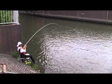 gratis download video - MARUKYU-baits-fishing
